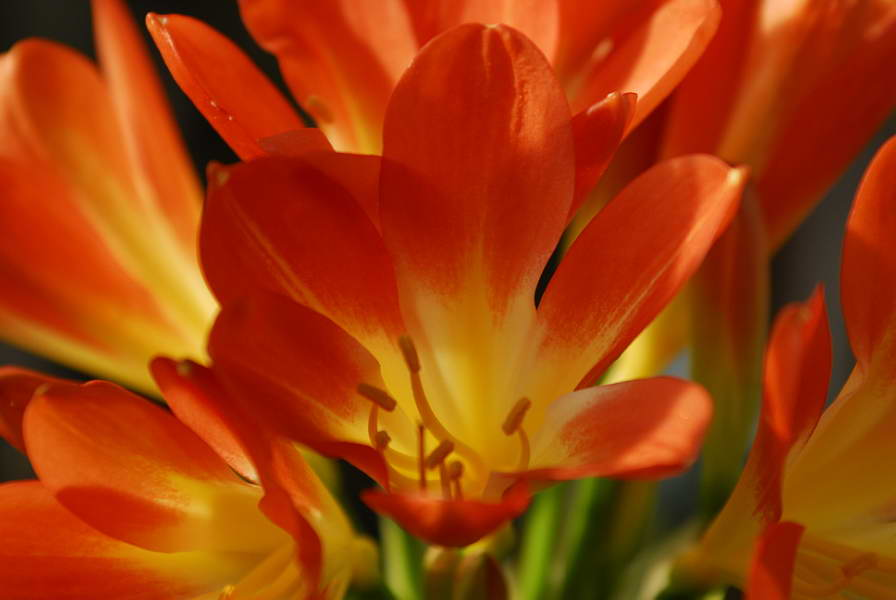 primavera_nl-02.jpg